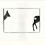 dyrenes-magi-2