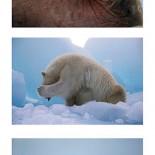 polar puzzle 11
