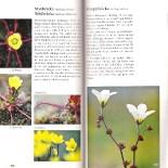 svalbard-guide-4