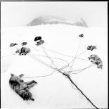 the-arctic 29