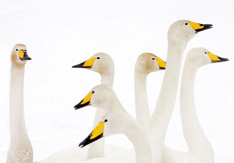 beste objektiv til fuglefoto